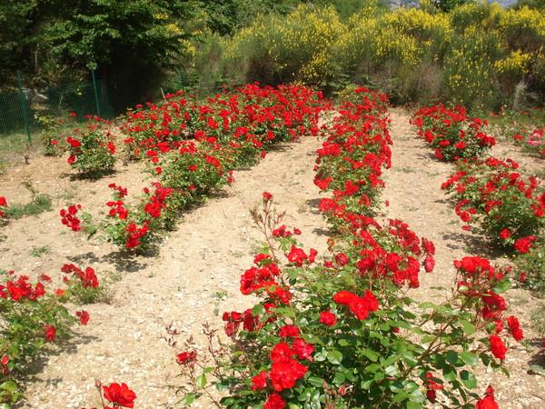 Respirer Les Fleurs Sentir Un Parfum